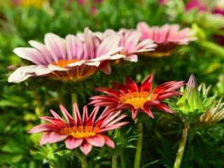 обои Цветы весны фото