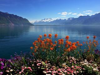 обои Швейцарская весна фото