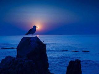 обои Удачный снимок - чайка и закат фото