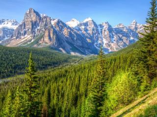 обои Хвойная долина у каменных гор фото