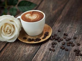 обои Зерна,   кофе и белая роза фото