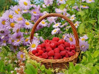 обои Спелая малина в корзине и цветы фото