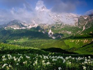 обои Альпийские луга фото