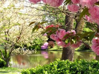 обои Весенний парковый пруд фото