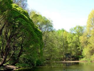 обои Весенний пейзаж у пруда фото