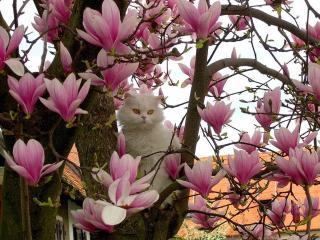 обои Белый кот весенний фото