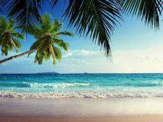 обои Зеленые пальмы над прибоем фото