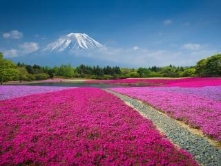 обои Водоем в цвету у горы фото