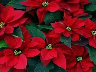 обои Причудливые цветы с красными листьями фото