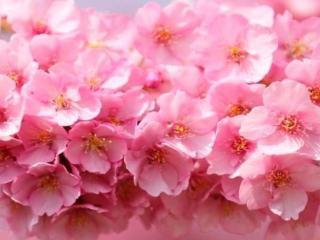 обои для рабочего стола: Цветы весенние