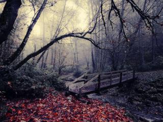 обои Осенний мост через ручей фото