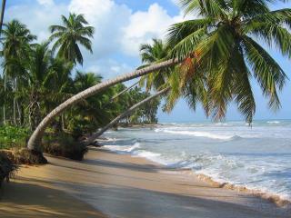 обои Пальмы склоненные над прибоем фото