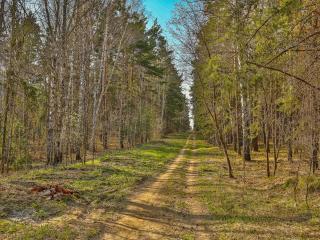 обои Дорога в весеннем лесу фото