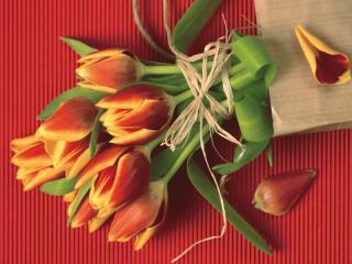 обои Тюльпаны и лепестки фото