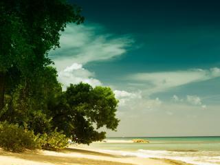 обои Зеленое дерево на пляже у самой воды фото