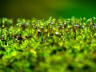 обои Крупная роса на траве фото