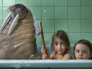 обои В ванне с моржом фото