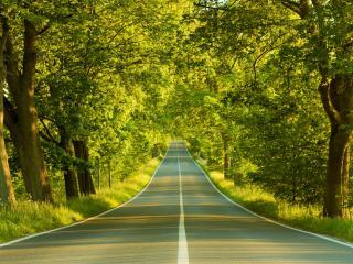 обои Прямая трасса под листвой фото
