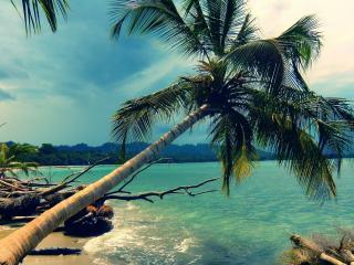 обои Наклоненная пальма в океан фото