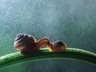 обои Улитки под дождем фото