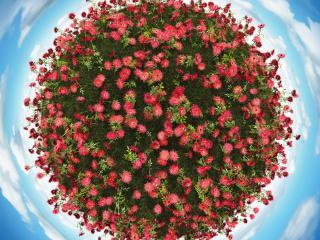 обои Цветочный остров окруженный небом фото