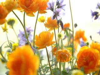обои Цветы начала лета фото