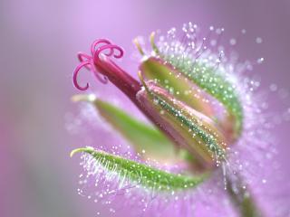 обои Причудливый распускающийся цветок фото