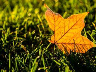 обои для рабочего стола: Одиноки желтый лист на траве