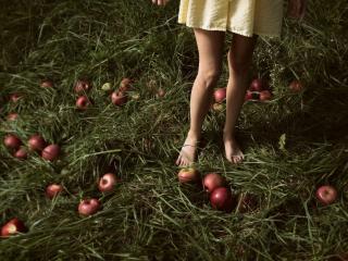 обои Рассыпанные яблоки у девичьих ног фото