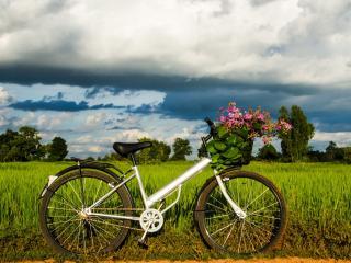 обои Велосипед в поле с цветами в корзине фото