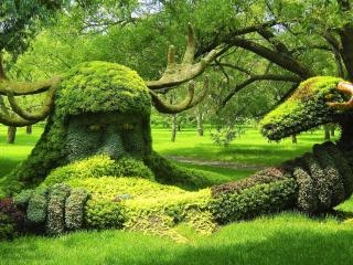 обои Творение из травы фото