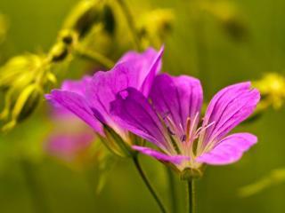обои Жёлто-лиловый цвет лета фото
