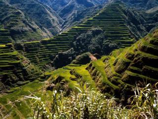 обои Филиппинские горные плантации фото