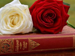 обои Две розы на томике Шекспира фото