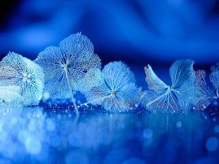 обои Нежные листочки в голубом фото