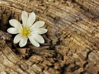обои Цветок в углублении сучка фото