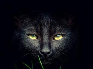 обои Глаза черной кошки в темноте фото