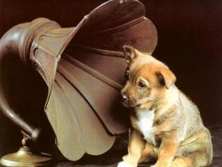 обои Музыкальный щенок фото