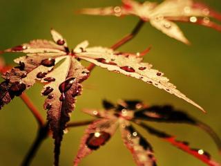 обои Большие листья с каплями воды фото