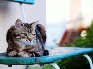 обои Полосатый кот на старом стуле фото