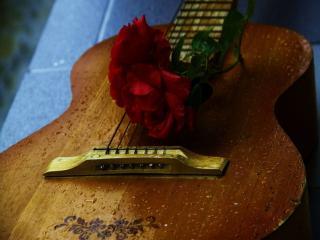обои Гитара,   дождь и роза фото