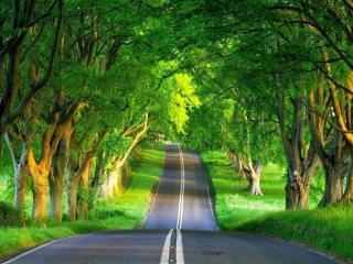 обои Дорога между деревьями фото