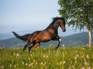 обои Конь гулял на воле... фото