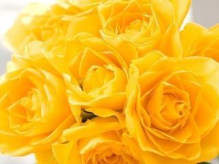 обои Букт жёлтых роз фото