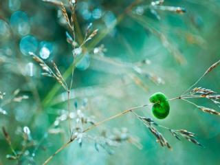 обои Зелёная гусеница на травинке фото