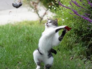 обои Кошачья охота фото
