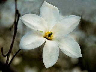 обои Белый цветок фото