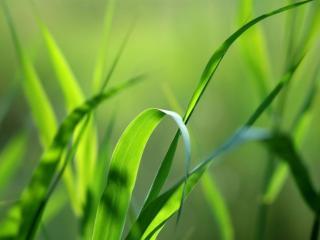 обои для рабочего стола: Зелёная травка