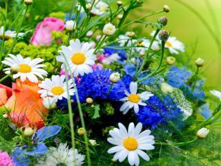 обои Букт из полевых цветов фото