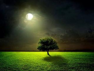 обои для рабочего стола: Дерево в свете луны